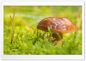 Mushroom, Green Moss Macro HD Wide Wallpaper for Widescreen