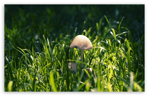 Mushroom In The Grass HD wallpaper for Wide 16:10 5:3 Widescreen WHXGA WQXGA WUXGA WXGA WGA ; HD 16:9 High Definition WQHD QWXGA 1080p 900p 720p QHD nHD ; Standard 4:3 5:4 3:2 Fullscreen UXGA XGA SVGA QSXGA SXGA DVGA HVGA HQVGA devices ( Apple PowerBook G4 iPhone 4 3G 3GS iPod Touch ) ; Tablet 1:1 ; iPad 1/2/Mini ; Mobile 4:3 5:3 3:2 16:9 5:4 - UXGA XGA SVGA WGA DVGA HVGA HQVGA devices ( Apple PowerBook G4 iPhone 4 3G 3GS iPod Touch ) WQHD QWXGA 1080p 900p 720p QHD nHD QSXGA SXGA ; Dual 16:10 5:3 4:3 5:4 WHXGA WQXGA WUXGA WXGA WGA UXGA XGA SVGA QSXGA SXGA ;