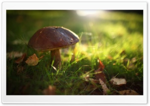 Mushroom In The Grass HD Wide Wallpaper for 4K UHD Widescreen desktop & smartphone