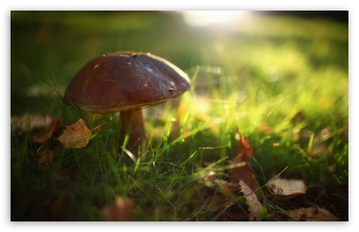 Mushroom In The Grass HD wallpaper for Wide 16:10 5:3 Widescreen WHXGA WQXGA WUXGA WXGA WGA ; HD 16:9 High Definition WQHD QWXGA 1080p 900p 720p QHD nHD ; Standard 4:3 5:4 3:2 Fullscreen UXGA XGA SVGA QSXGA SXGA DVGA HVGA HQVGA devices ( Apple PowerBook G4 iPhone 4 3G 3GS iPod Touch ) ; Tablet 1:1 ; iPad 1/2/Mini ; Mobile 4:3 5:3 3:2 16:9 5:4 - UXGA XGA SVGA WGA DVGA HVGA HQVGA devices ( Apple PowerBook G4 iPhone 4 3G 3GS iPod Touch ) WQHD QWXGA 1080p 900p 720p QHD nHD QSXGA SXGA ; Dual 5:4 QSXGA SXGA ;