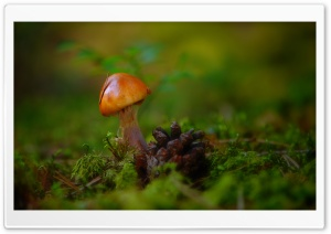 Mushroom Macro HD Wide Wallpaper for Widescreen