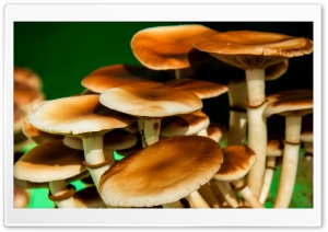 Mushrooms HD Wide Wallpaper for Widescreen