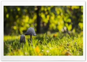 Mushrooms Green Grass HD Wide Wallpaper for Widescreen