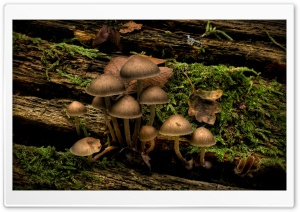 Mushrooms Growing On A Tree Stump HD Wide Wallpaper for 4K UHD Widescreen desktop & smartphone