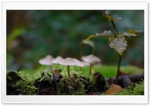 Mushrooms, Moss, Macro Ultra HD Wallpaper for 4K UHD Widescreen desktop, tablet & smartphone