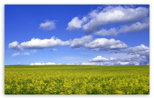 Mustard Flower Field 2 HD wallpaper for Wide 16:10 5:3 Widescreen WHXGA WQXGA WUXGA WXGA WGA ; HD 16:9 High Definition WQHD QWXGA 1080p 900p 720p QHD nHD ; Standard 4:3 5:4 3:2 Fullscreen UXGA XGA SVGA QSXGA SXGA DVGA HVGA HQVGA devices ( Apple PowerBook G4 iPhone 4 3G 3GS iPod Touch ) ; Tablet 1:1 ; iPad 1/2/Mini ; Mobile 4:3 5:3 3:2 16:9 5:4 - UXGA XGA SVGA WGA DVGA HVGA HQVGA devices ( Apple PowerBook G4 iPhone 4 3G 3GS iPod Touch ) WQHD QWXGA 1080p 900p 720p QHD nHD QSXGA SXGA ; Dual 16:10 5:3 16:9 4:3 5:4 WHXGA WQXGA WUXGA WXGA WGA WQHD QWXGA 1080p 900p 720p QHD nHD UXGA XGA SVGA QSXGA SXGA ;
