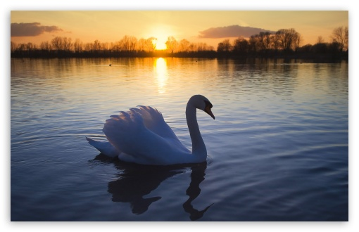 Mute Swan HD wallpaper for Wide 16:10 5:3 Widescreen WHXGA WQXGA WUXGA WXGA WGA ; HD 16:9 High Definition WQHD QWXGA 1080p 900p 720p QHD nHD ; Standard 4:3 5:4 3:2 Fullscreen UXGA XGA SVGA QSXGA SXGA DVGA HVGA HQVGA devices ( Apple PowerBook G4 iPhone 4 3G 3GS iPod Touch ) ; Tablet 1:1 ; iPad 1/2/Mini ; Mobile 4:3 5:3 3:2 16:9 5:4 - UXGA XGA SVGA WGA DVGA HVGA HQVGA devices ( Apple PowerBook G4 iPhone 4 3G 3GS iPod Touch ) WQHD QWXGA 1080p 900p 720p QHD nHD QSXGA SXGA ;