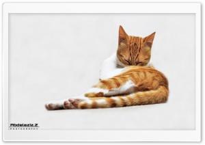 My cat Ultra HD Wallpaper for 4K UHD Widescreen desktop, tablet & smartphone