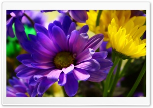 My Flowers HD Wide Wallpaper for Widescreen