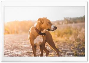 My Little Boy At Sunset Ultra HD Wallpaper for 4K UHD Widescreen desktop, tablet & smartphone