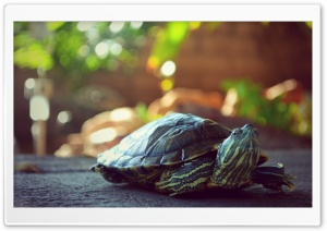 My turtle Titi Ultra HD Wallpaper for 4K UHD Widescreen desktop, tablet & smartphone