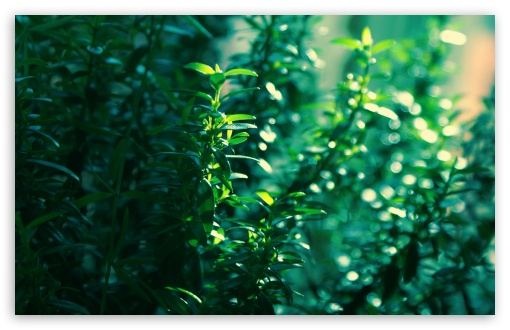 Myrtle Leaves HD wallpaper for Wide 16:10 5:3 Widescreen WHXGA WQXGA WUXGA WXGA WGA ; HD 16:9 High Definition WQHD QWXGA 1080p 900p 720p QHD nHD ; UHD 16:9 WQHD QWXGA 1080p 900p 720p QHD nHD ; Standard 4:3 5:4 3:2 Fullscreen UXGA XGA SVGA QSXGA SXGA DVGA HVGA HQVGA devices ( Apple PowerBook G4 iPhone 4 3G 3GS iPod Touch ) ; Tablet 1:1 ; iPad 1/2/Mini ; Mobile 4:3 5:3 3:2 16:9 5:4 - UXGA XGA SVGA WGA DVGA HVGA HQVGA devices ( Apple PowerBook G4 iPhone 4 3G 3GS iPod Touch ) WQHD QWXGA 1080p 900p 720p QHD nHD QSXGA SXGA ; Dual 16:10 5:3 4:3 5:4 WHXGA WQXGA WUXGA WXGA WGA UXGA XGA SVGA QSXGA SXGA ;