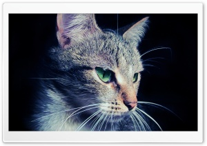 Mysterious Cat HD Wide Wallpaper for 4K UHD Widescreen desktop & smartphone