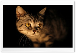 Mysterious Cat HD Wide Wallpaper for Widescreen
