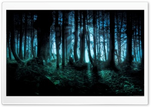 Mysterious Forest HD Wide Wallpaper for Widescreen