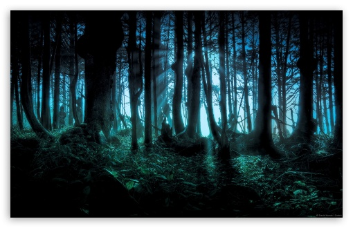 Mysterious Forest HD wallpaper for Wide 16:10 5:3 Widescreen WHXGA WQXGA WUXGA WXGA WGA ; HD 16:9 High Definition WQHD QWXGA 1080p 900p 720p QHD nHD ; Standard 4:3 5:4 3:2 Fullscreen UXGA XGA SVGA QSXGA SXGA DVGA HVGA HQVGA devices ( Apple PowerBook G4 iPhone 4 3G 3GS iPod Touch ) ; Tablet 1:1 ; iPad 1/2/Mini ; Mobile 4:3 5:3 3:2 16:9 5:4 - UXGA XGA SVGA WGA DVGA HVGA HQVGA devices ( Apple PowerBook G4 iPhone 4 3G 3GS iPod Touch ) WQHD QWXGA 1080p 900p 720p QHD nHD QSXGA SXGA ;