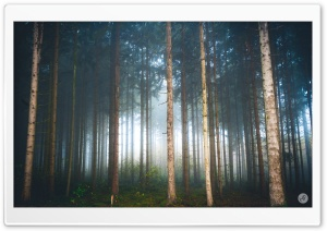 Mysterious Light, Foggy Forest Ultra HD Wallpaper for 4K UHD Widescreen desktop, tablet & smartphone