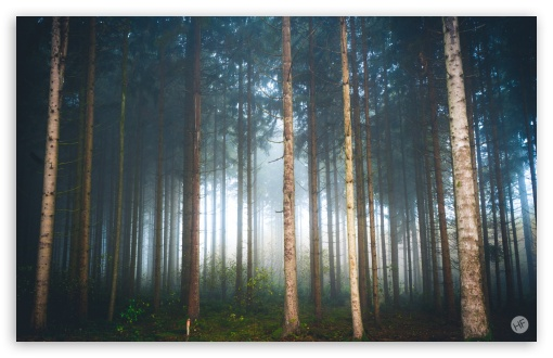 Mysterious Light, Foggy Forest UltraHD Wallpaper for Wide 16:10 5:3 Widescreen WHXGA WQXGA WUXGA WXGA WGA ; 8K UHD TV 16:9 Ultra High Definition 2160p 1440p 1080p 900p 720p ; Standard 3:2 Fullscreen DVGA HVGA HQVGA ( Apple PowerBook G4 iPhone 4 3G 3GS iPod Touch ) ; Mobile 5:3 3:2 16:9 - WGA DVGA HVGA HQVGA ( Apple PowerBook G4 iPhone 4 3G 3GS iPod Touch ) 2160p 1440p 1080p 900p 720p ;