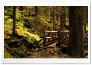 Mystery Bridge   Olympic National Park In Washington HD Wide Wallpaper for Widescreen