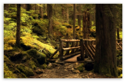 Mystery Bridge   Olympic National Park In Washington HD wallpaper for Wide 16:10 5:3 Widescreen WHXGA WQXGA WUXGA WXGA WGA ; HD 16:9 High Definition WQHD QWXGA 1080p 900p 720p QHD nHD ; Standard 4:3 5:4 3:2 Fullscreen UXGA XGA SVGA QSXGA SXGA DVGA HVGA HQVGA devices ( Apple PowerBook G4 iPhone 4 3G 3GS iPod Touch ) ; Tablet 1:1 ; iPad 1/2/Mini ; Mobile 4:3 5:3 3:2 16:9 5:4 - UXGA XGA SVGA WGA DVGA HVGA HQVGA devices ( Apple PowerBook G4 iPhone 4 3G 3GS iPod Touch ) WQHD QWXGA 1080p 900p 720p QHD nHD QSXGA SXGA ; Dual 16:10 5:3 16:9 4:3 5:4 WHXGA WQXGA WUXGA WXGA WGA WQHD QWXGA 1080p 900p 720p QHD nHD UXGA XGA SVGA QSXGA SXGA ;