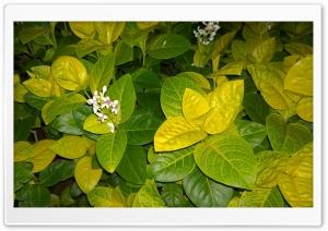 Mystical Flower HD Wide Wallpaper for Widescreen