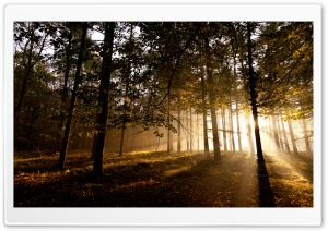 Mystical Forest II HD Wide Wallpaper for Widescreen