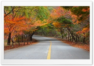 Naejangsan National Park HD Wide Wallpaper for Widescreen