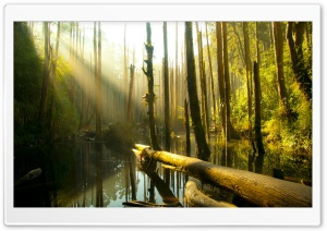 Nantou County Forest HD Wide Wallpaper for Widescreen