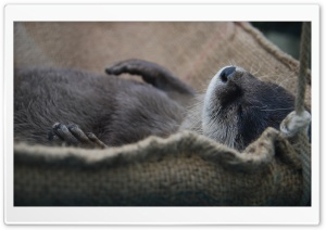Nap Otter HD Wide Wallpaper for 4K UHD Widescreen desktop & smartphone
