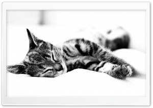 Nap Time HD Wide Wallpaper for Widescreen