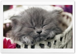 Naptime For Kitten HD Wide Wallpaper for Widescreen