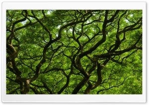 Natural Roof Ultra HD Wallpaper for 4K UHD Widescreen desktop, tablet & smartphone