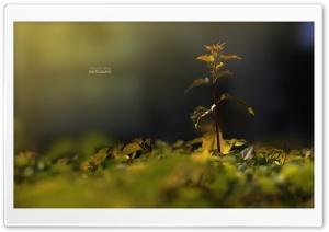 Nature HD Wide Wallpaper for 4K UHD Widescreen desktop & smartphone
