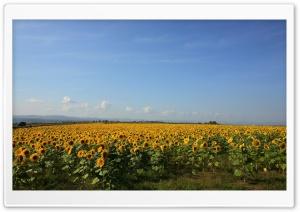 Nature Beauty 6 Ultra HD Wallpaper for 4K UHD Widescreen desktop, tablet & smartphone
