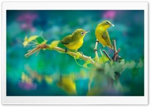 Nature Birds Ultra HD Wallpaper for 4K UHD Widescreen desktop, tablet & smartphone