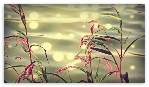 Nature JD HD wallpaper for HD 16:9 High Definition WQHD QWXGA 1080p ...