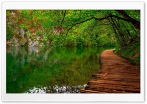Nature River Wooden Path HD Wide Wallpaper for Widescreen