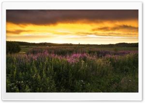Nature Scenes Ultra HD Wallpaper for 4K UHD Widescreen desktop, tablet & smartphone