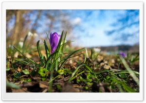 Nature Spring Flower HD Wide Wallpaper for Widescreen