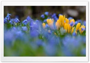 Nature Spring Flowers Ultra HD Wallpaper for 4K UHD Widescreen desktop, tablet & smartphone