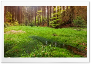 Nature Swamp In The Forest HD Wide Wallpaper for Widescreen