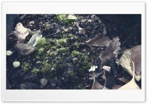 Natures Ground Ultra HD Wallpaper for 4K UHD Widescreen desktop, tablet & smartphone