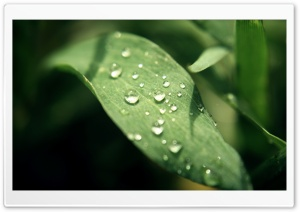 Nature's Tears HD Wide Wallpaper for Widescreen