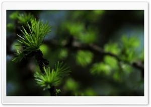 Needles, Summer HD Wide Wallpaper for Widescreen