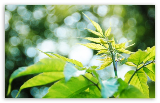 New Leaves Bokeh HD wallpaper for Wide 16:10 5:3 Widescreen WHXGA WQXGA WUXGA WXGA WGA ; HD 16:9 High Definition WQHD QWXGA 1080p 900p 720p QHD nHD ; Standard 4:3 5:4 3:2 Fullscreen UXGA XGA SVGA QSXGA SXGA DVGA HVGA HQVGA devices ( Apple PowerBook G4 iPhone 4 3G 3GS iPod Touch ) ; Tablet 1:1 ; iPad 1/2/Mini ; Mobile 4:3 5:3 3:2 16:9 5:4 - UXGA XGA SVGA WGA DVGA HVGA HQVGA devices ( Apple PowerBook G4 iPhone 4 3G 3GS iPod Touch ) WQHD QWXGA 1080p 900p 720p QHD nHD QSXGA SXGA ;