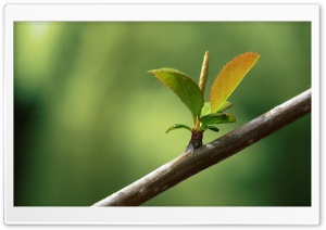 New Leaves Macro HD Wide Wallpaper for Widescreen