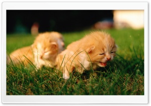 Newborn Kittens HD Wide Wallpaper for 4K UHD Widescreen desktop & smartphone