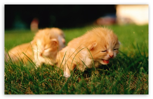 Newborn Kittens ❤ 4K UHD Wallpaper for Wide 16:10 5:3 Widescreen WHXGA WQXGA WUXGA WXGA WGA ; 4K UHD 16:9 Ultra High Definition 2160p 1440p 1080p 900p 720p ; Standard 4:3 5:4 3:2 Fullscreen UXGA XGA SVGA QSXGA SXGA DVGA HVGA HQVGA ( Apple PowerBook G4 iPhone 4 3G 3GS iPod Touch ) ; Tablet 1:1 ; iPad 1/2/Mini ; Mobile 4:3 5:3 3:2 16:9 5:4 - UXGA XGA SVGA WGA DVGA HVGA HQVGA ( Apple PowerBook G4 iPhone 4 3G 3GS iPod Touch ) 2160p 1440p 1080p 900p 720p QSXGA SXGA ;
