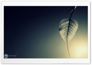 Newly Born Leaf HD Wide Wallpaper for Widescreen