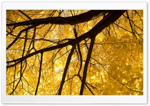 Nice Yellow Leafage HD Wide Wallpaper for Widescreen
